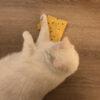 kattenkruid kussentje