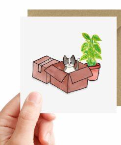 Kaart kat in doos